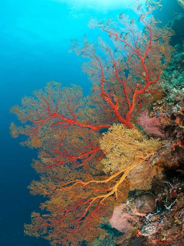 Deep Sea Diver Tote